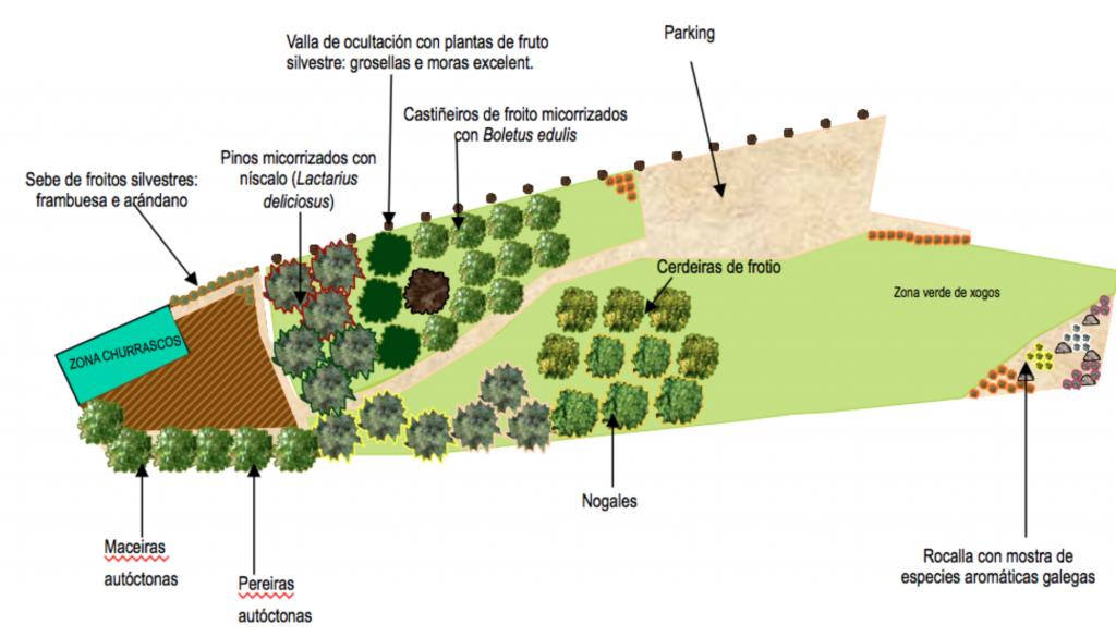 Diseño de un parque forestal desarrollado por Hifas da Terra