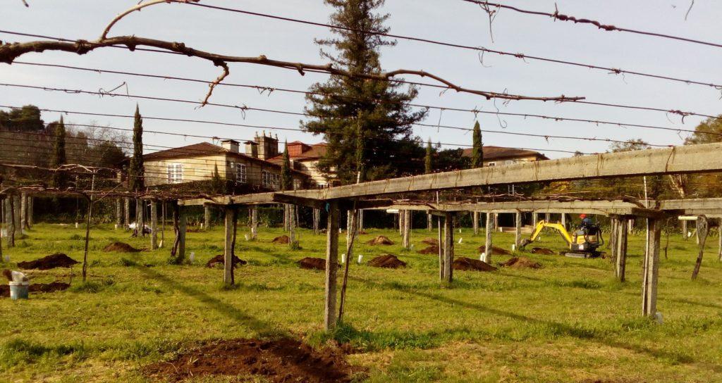 Plantación de nuevas cepas protegidas con MICOTECNOSOLEl proyecto Sanavid desarrollado por Hifas Foresta.
