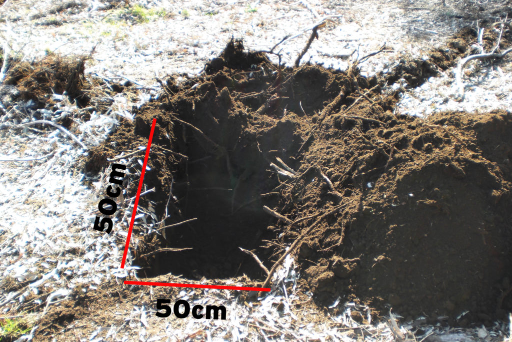 Ahoyado de dimensiones aproximadas mínimas de 50x50 cm  y una profundidad de 50 a 60 cm.