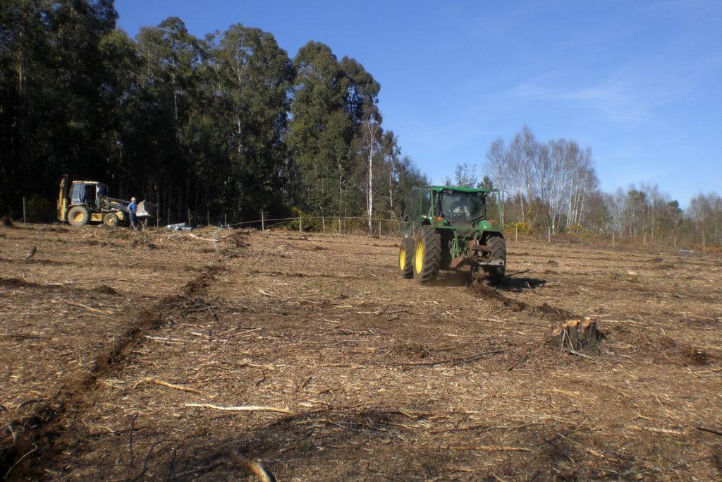 Subsolado para la preparación del terreno para la plantación de castaño