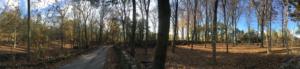 Preparación del terreno para la plantación de castaños