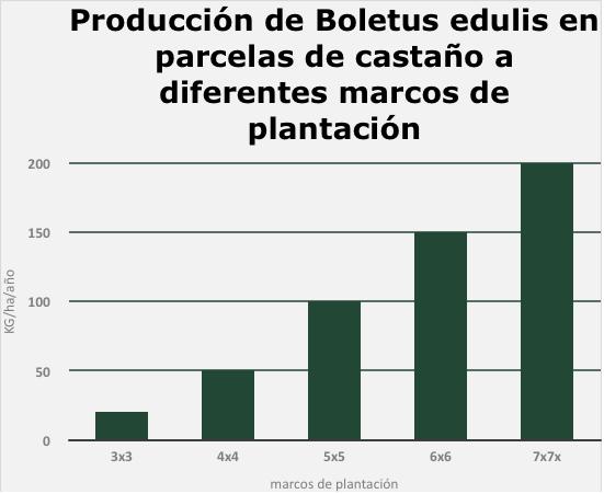 Fig. 8. A partir de estudios llevados a cabo por Hifas Foresta en colaboración con el Centro de Investigaciones Forestales de Lourizán se han conseguido los datos necesarios en cuanto a los mejores marcos de plantación para la producción de setas en plantaciones de castaño. En la gráfica se puede ver como con marcos de plantación de 7x7 metros podemos conseguir producir hasta 200 kg de Boletus edulis por hectárea y año.