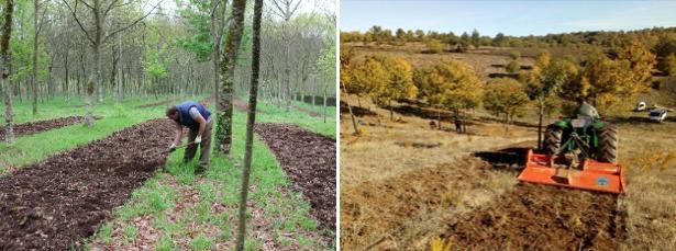 Fig. 11. Para micorrizar terrenos con mucha hierba, suelos muy compactados o grandes superficies un fresado superficial nos facilitará el trabajo.