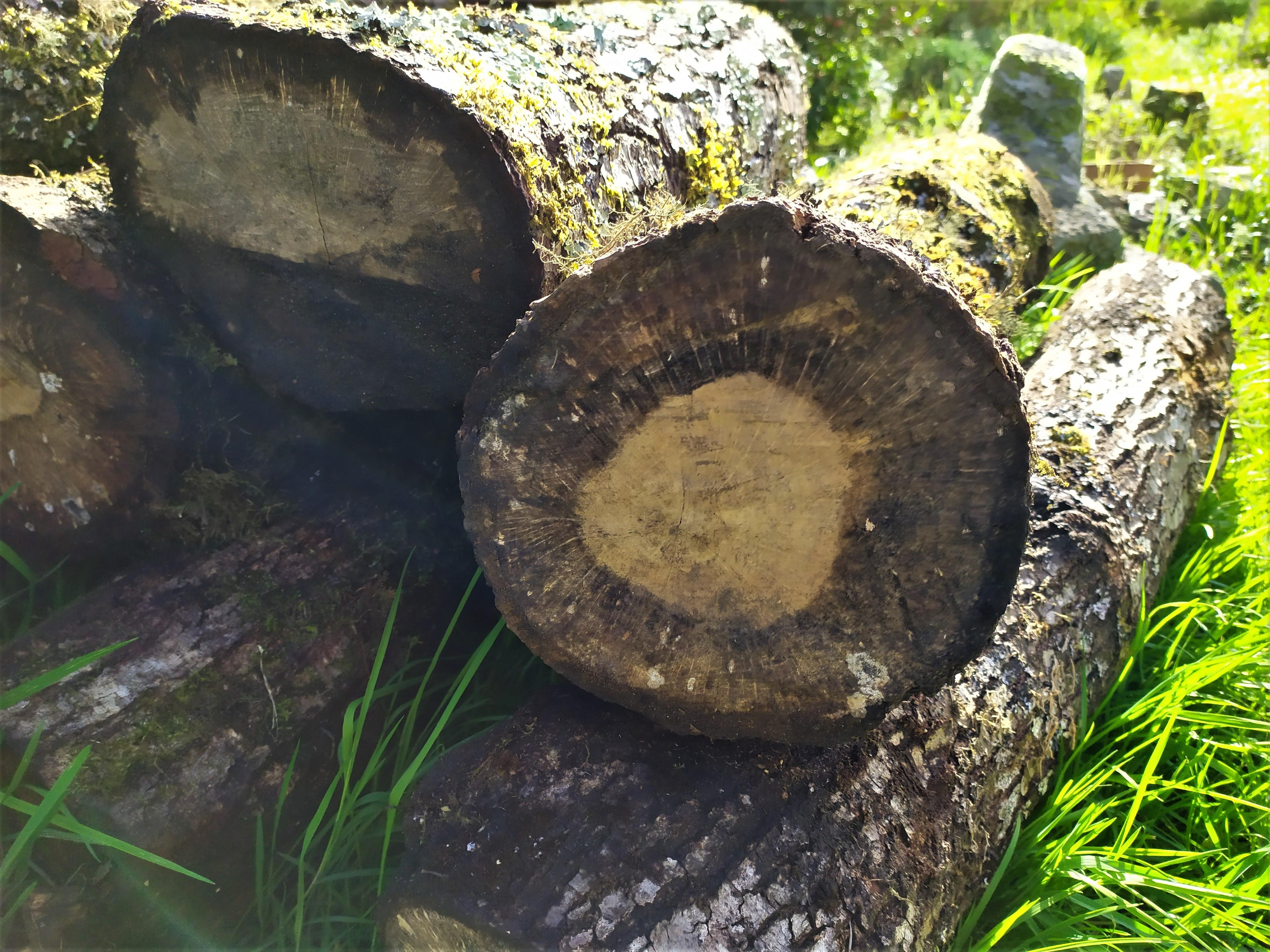 Micelo de pellets de Hifas Foresta